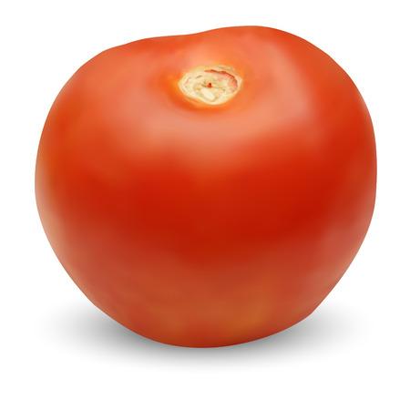 vector tomato Illustration