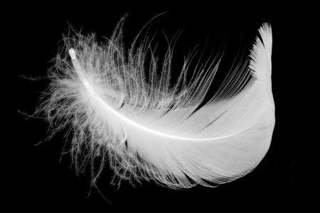 White feather on black background Standard-Bild