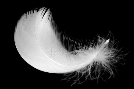 pluma blanca: Pluma blanca sobre fondo negro Foto de archivo