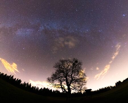 The Milky Way captured wide-spread along with the treetops with a yellow-orange glow on the horizon and lots of stars in the sky during a full night.