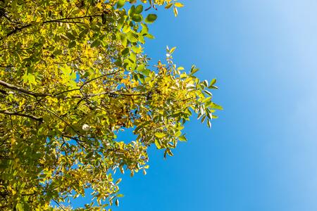 Les branches des arbres et le ciel bleu