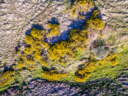 Aerial view of scottish broom on a moor in the highlands