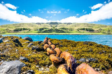 deteriorated: Beautiful rusty chain lying on seaweed
