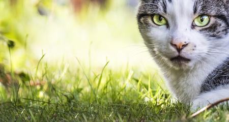 Cat observing its prey in a tree