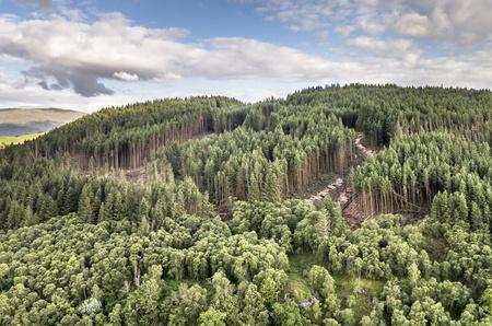 ecosistema: Vista aérea de las obras de feforestación