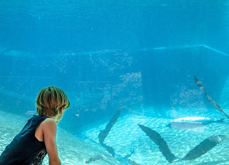Silhouette of a boy looking at aeal in the aquarium