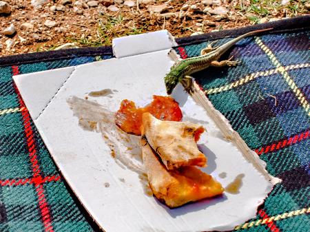 Salamander stealing pizza salami from the folks.