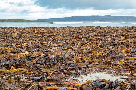 Seaweed lying on Portnoo beach in County Donegal, Ireland
