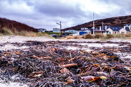 Seaweed lying on Portnoo beach in County Donegal, Ireland