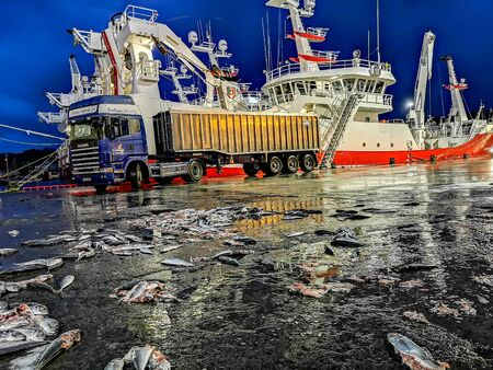Killybegs, Co. Donegal  Ireland - February 09 2020 - Lots of fish lying around in the harbour is full of fishing boats during storm Ciara