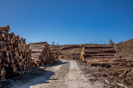 Timber stacks at Bonny Glen in County Donegal - Ireland. Banque d'images