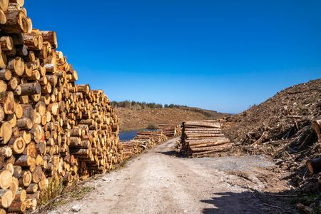 Timber stacks at Bonny Glen in County Donegal - Ireland