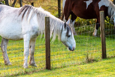 Horse grazing over wire fence in autumn