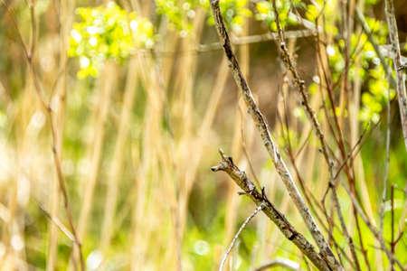 Red Robin, red breast bird visiting a garden in Ireland Reklamní fotografie