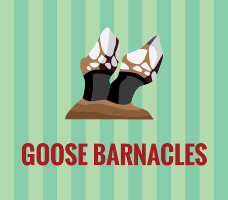 Goose barnacles drawing on green background