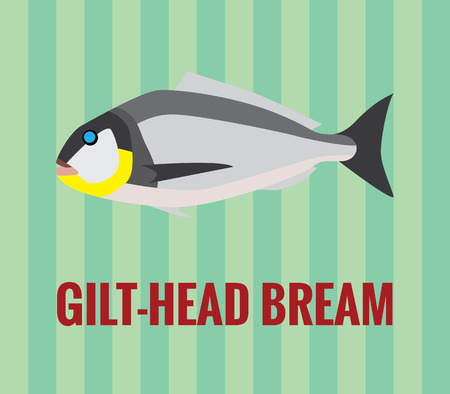 gilthead bream: Gilt-head bream drawing