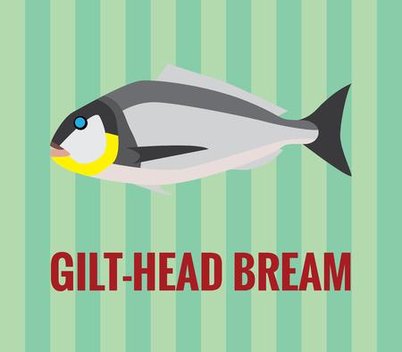bream: Gilt-head bream drawing