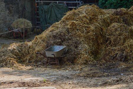 Wheelbarrow with dung. A pile of stinky dung. Manure on a farm. Reklamní fotografie