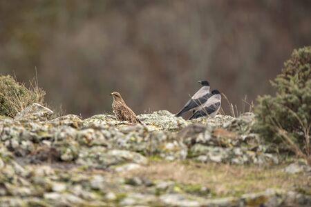 buzzards and crows