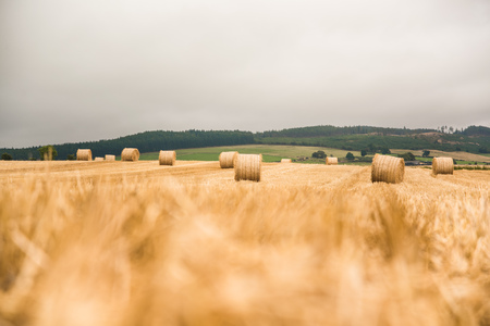 Large round straw bale on field - Scotland Banco de Imagens