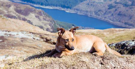 Dog in mountains - cute rescue dog walking in Scottish Highlands Archivio Fotografico