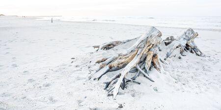 Driftwood on a beach in Ustka, Baltic Sea, Poland