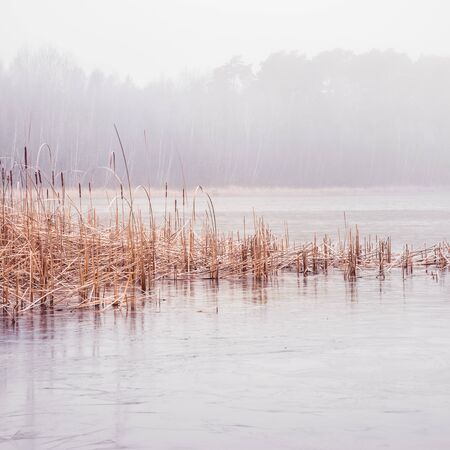 Forest lake covered with thick morning mist Banco de Imagens - 130734106