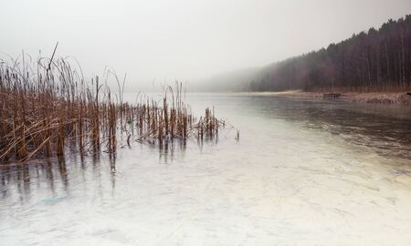 Forest lake covered with thick morning mist