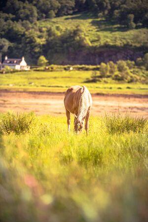 Horse - wild brown horse running on a green meadow Banco de Imagens
