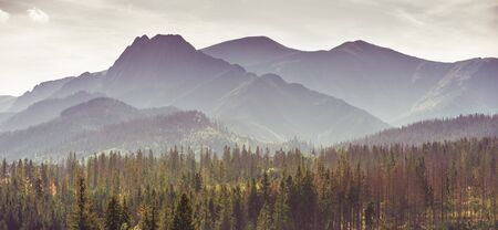 Tatra Mountains in the cold autumn morning covered by mist - colourful forest in the foreground Banco de Imagens