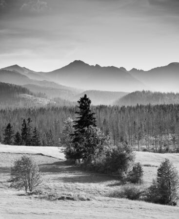 Mysterious landscape - black and white photo of misty mountains and spruce forest
