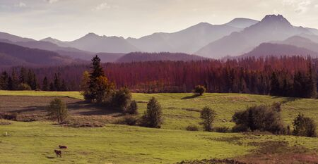 Autumn landscape of Tatra Mountains - misty mountains, frost, cold mornings, colourful trees Banco de Imagens