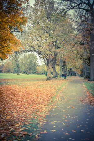 Portrait of mature couple in the autumn park
