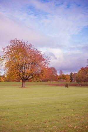 Autumn scene. Bright autumn day. Beautiful nature in october. Sunny autumn landscape. Amazing fall