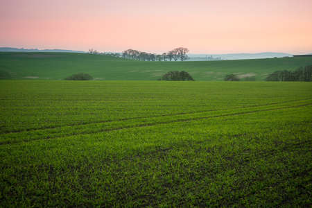 Tranquil landscape of rural Scotland - soft green grass, sunset over mountains, trees on horizon