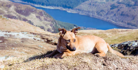 Dog in mountains - cute rescue dog walking in Scottish Highlands 写真素材