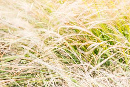 Impressionism meadow wildflower Stock Photos