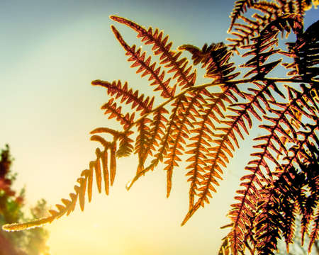 fern bush in a forest in a light of sun, early morning forest scene