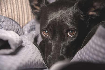 Black homeless dog scared of cruel owner Standard-Bild