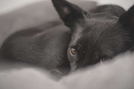 Black dog with sad eyes - mistreated rescue dog finds a new home