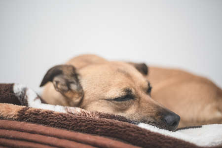 Brown dog with sad eyes - rescue dog finds a new home