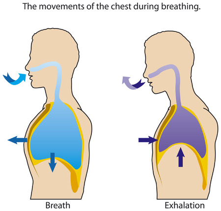 The movements of the chest when breathing. Stock Illustratie