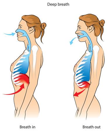 female breast: Deep breathing technique Illustration