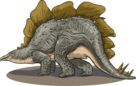 stegosaurus: Vector drawing of a dinosaur - Stegosaurus Illustration