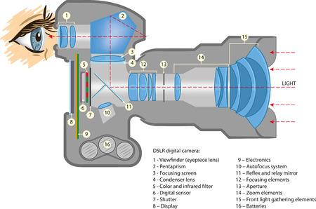 digital slr: The basic working principle of DSLR digital cameras.