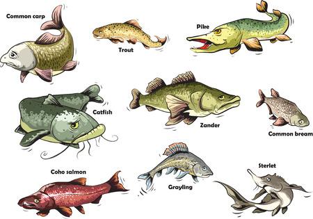 jumping carp: Fresh water fishes.