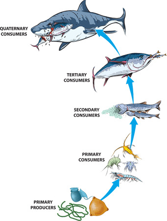 sardines: Ocean food chain Illustration