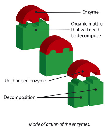 Mode of action of the enzymes. 版權商用圖片 - 34890921