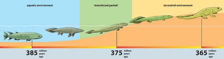 Animal evolution - from fish to reptile. Stock Illustratie