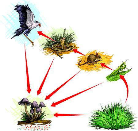 voedingsmiddelen: Voedselketen